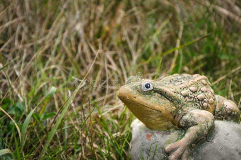 Stena grodan på ett gräs och att se kameran royaltyfri fotografi