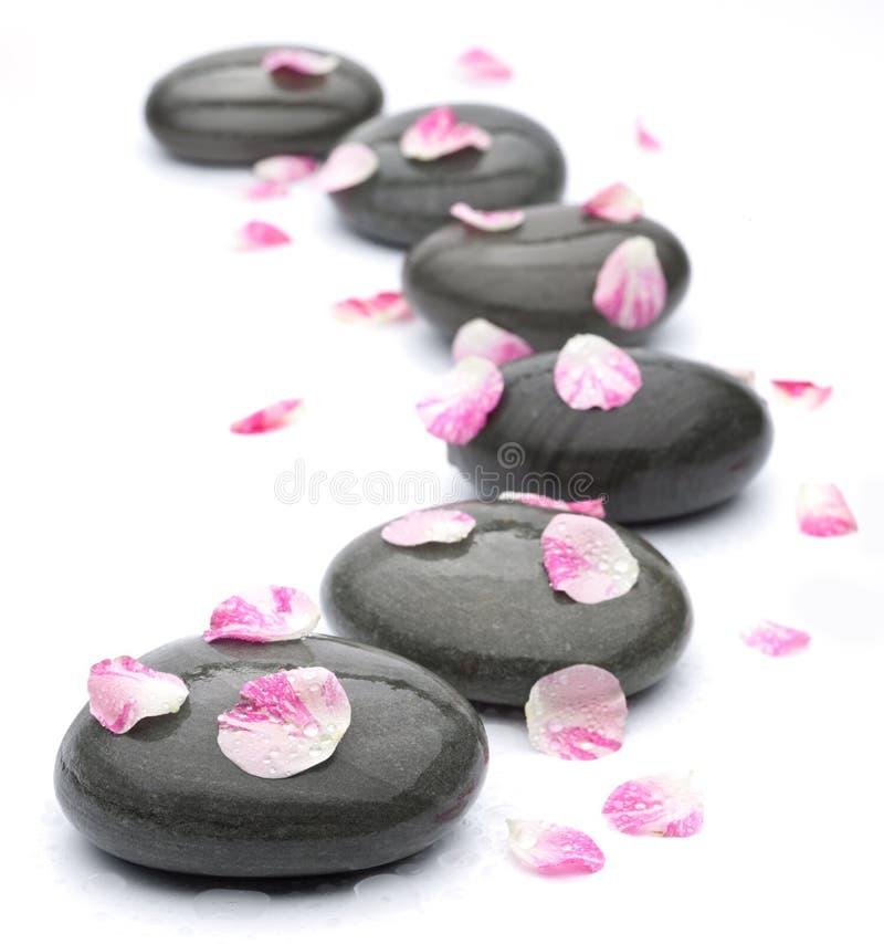 stenar den rose brunnsorten för petals white