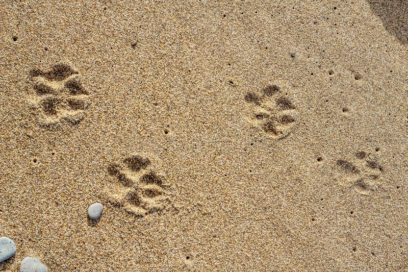 Stenar på sanden royaltyfria foton