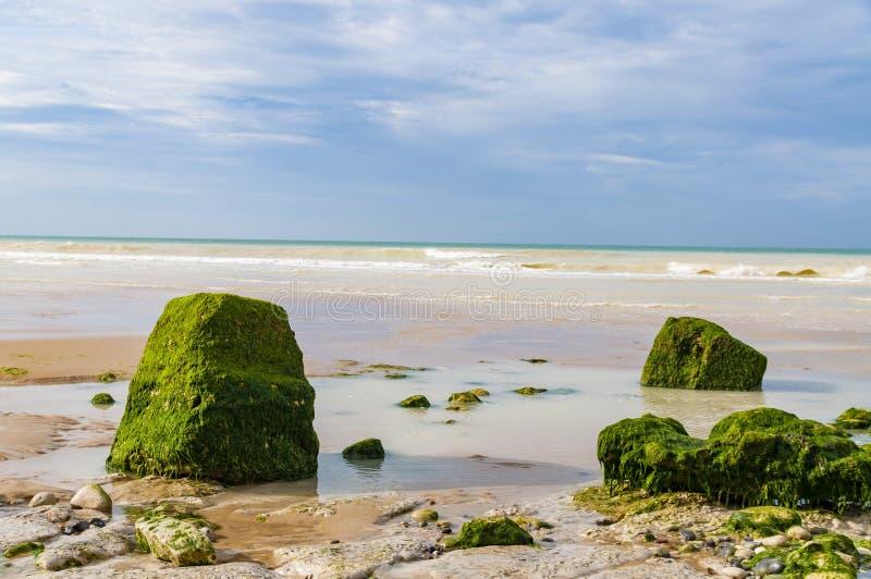 Stenar som täckas av alger som ligger på kusten, skjuld'Opale, Frankrike arkivfoton
