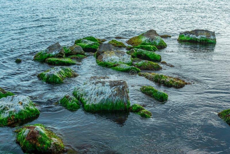 Stenar som t?ckas med mossa i ett hav p? en sommardag, seascape royaltyfri foto
