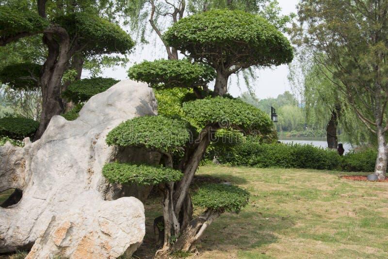 stenar trees arkivbilder