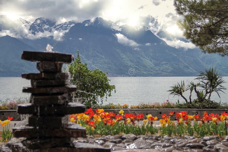 Stenar tulpan near sjön och berg royaltyfri foto