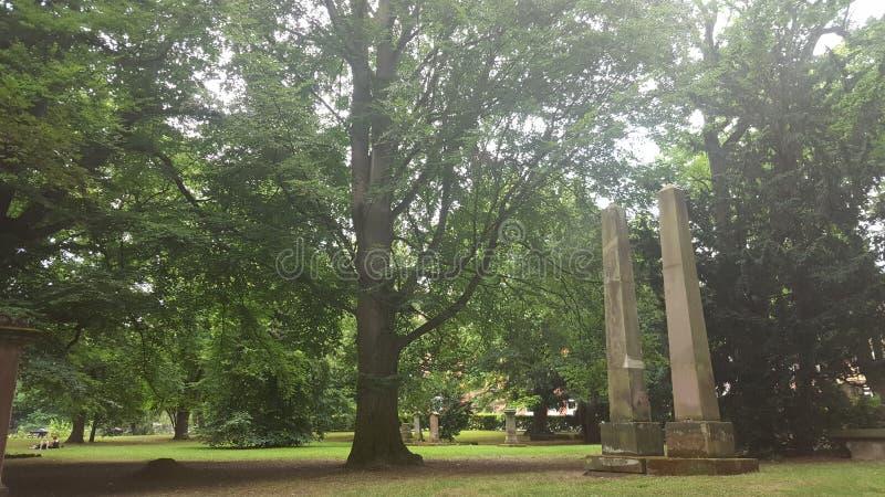 Stenar under träd royaltyfri foto