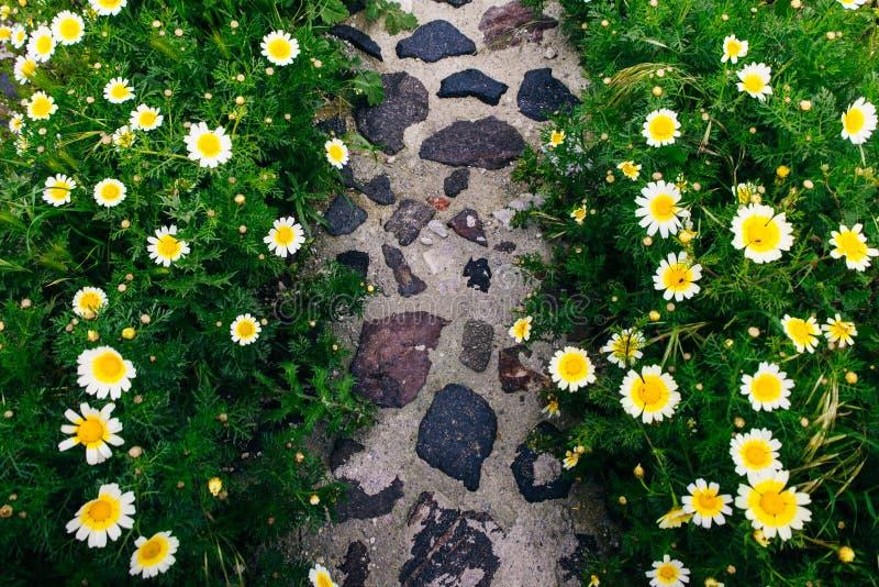 Stenbana i vårblommaträdgård fotografering för bildbyråer
