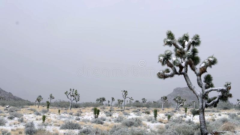 Stenblock och Joshua Trees i Joshua Tree National Park, Kalifornien royaltyfri bild