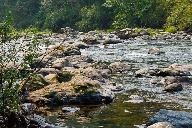 Stenblock och träd längs kanten av Greenet River i washingt fotografering för bildbyråer