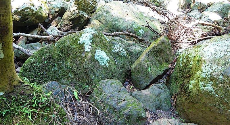 Stenen in bos stock afbeelding