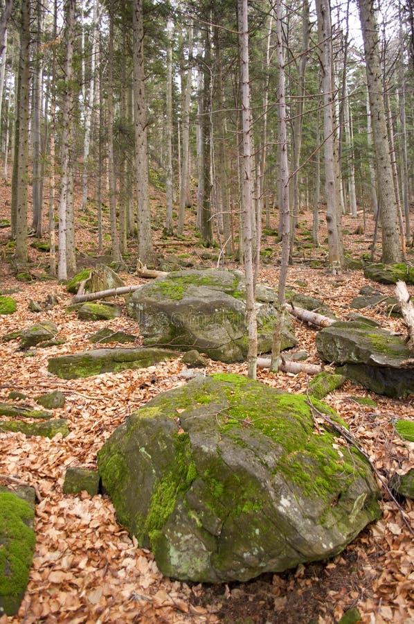 Stenen en bladeren in bos royalty-vrije stock foto