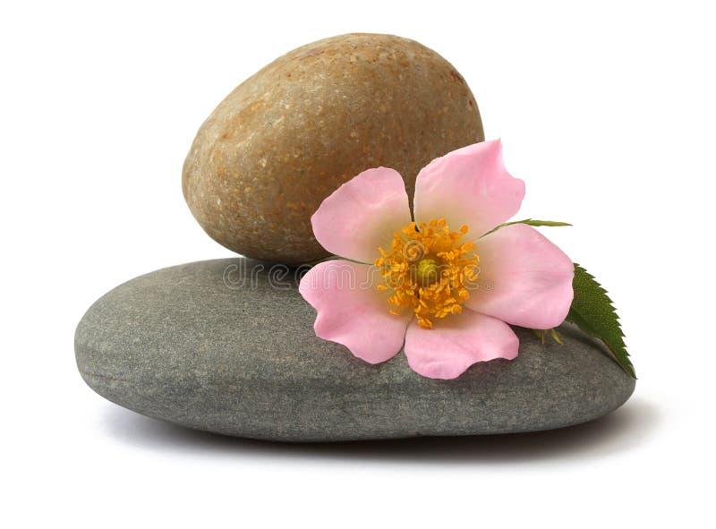 Stenen en bloem stock afbeelding
