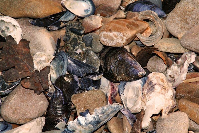 Stenen en mosselen stock fotografie