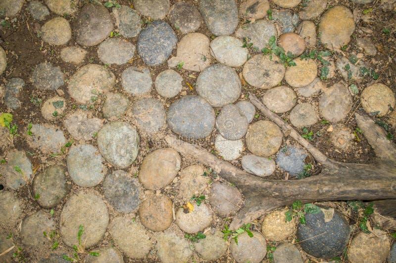 Stenen, gras en installatiewortel op grond, als Achtergrond en Textuur wordt gebruikt die royalty-vrije stock foto's