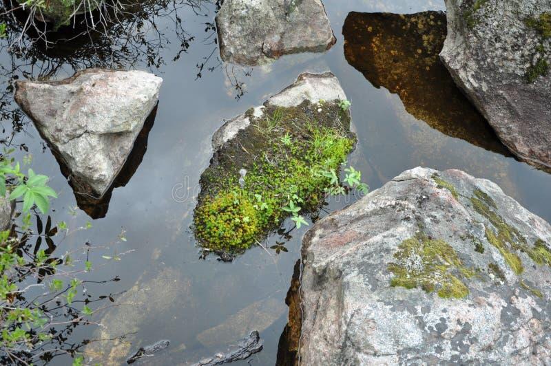 Stenen in het water stock foto