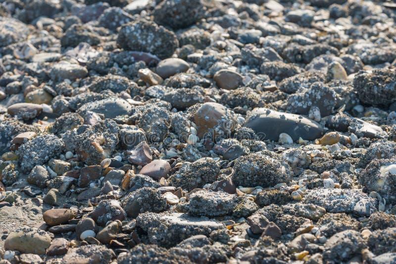 Stenen met eikeleendenmosselen worden behandeld van het sluiten dat stock foto's