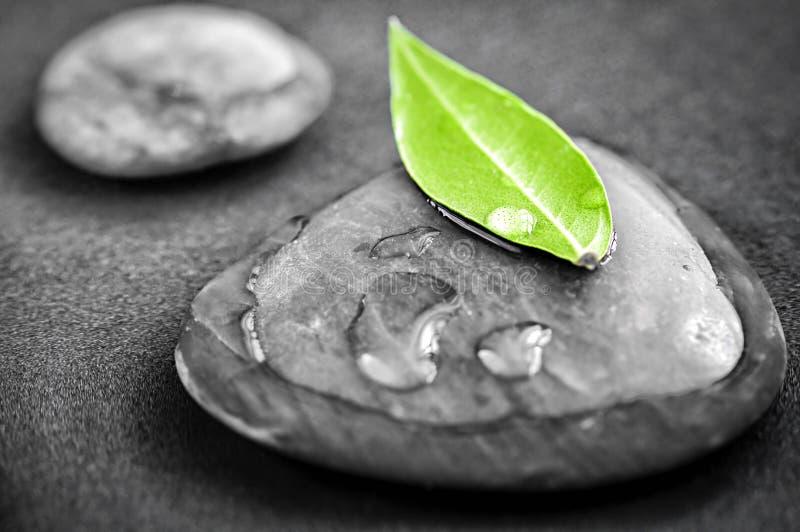 Stenen met groen blad stock foto's