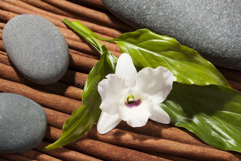 Stenen met orchideebloem, de stijl van Japan van samenstelling. stock afbeeldingen
