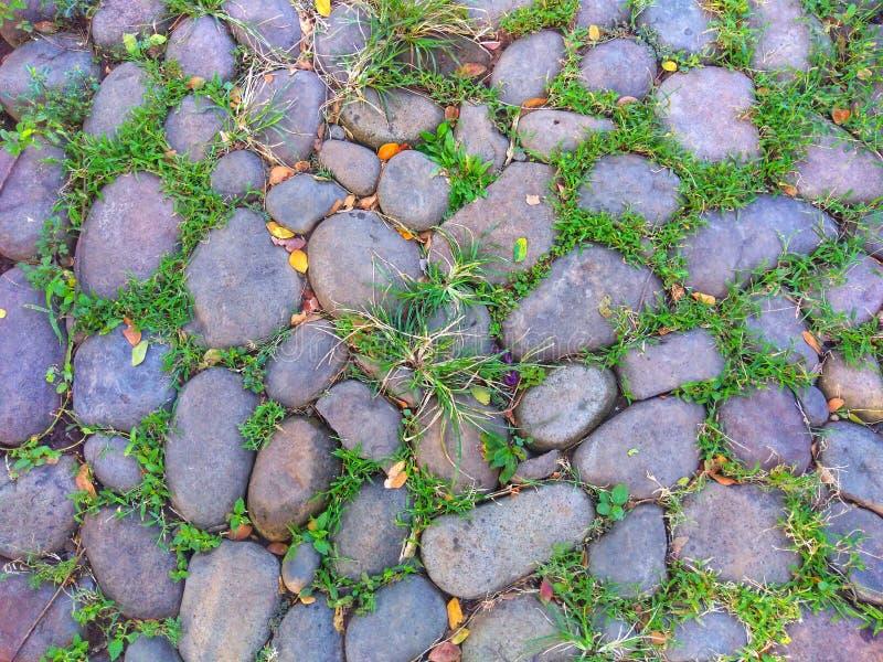 Stenen och gräs av stenvägen i parkerar Skott för hög vinkel genom att använda som en bakgrund eller en tapet arkivbilder