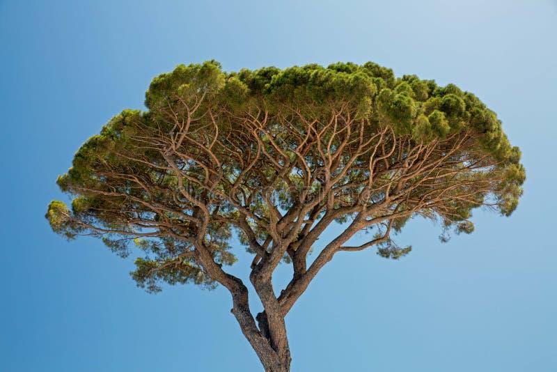 Stenen sörjer trädet arkivfoton