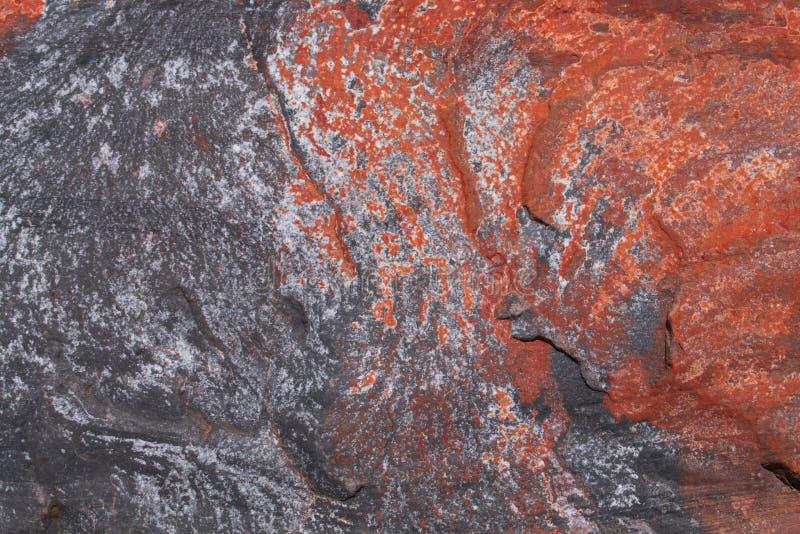 Stenentextuur en achtergrond De textuur van de rots Het leven koraal royalty-vrije stock foto's