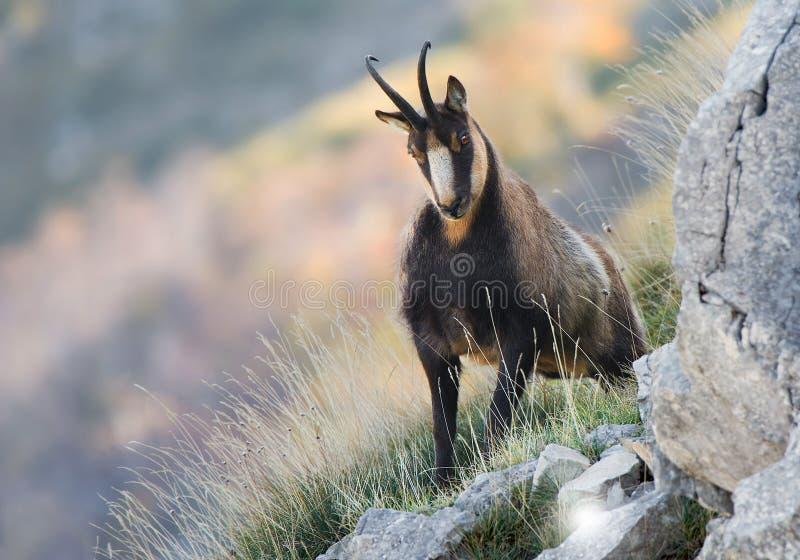 Stenget i nationalparken av Abruzzo fotografering för bildbyråer