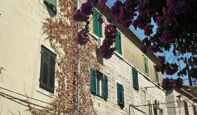 Stenhus med gröna fönster i gatan av den gamla staden, härlig arkitektur, solig dag, splittring, Kroatien royaltyfria foton