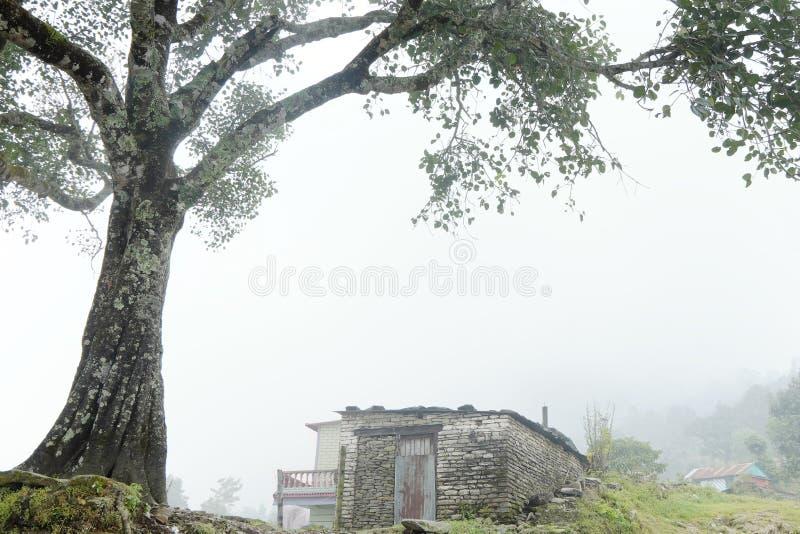 Stenhus och träd i dimman royaltyfria bilder