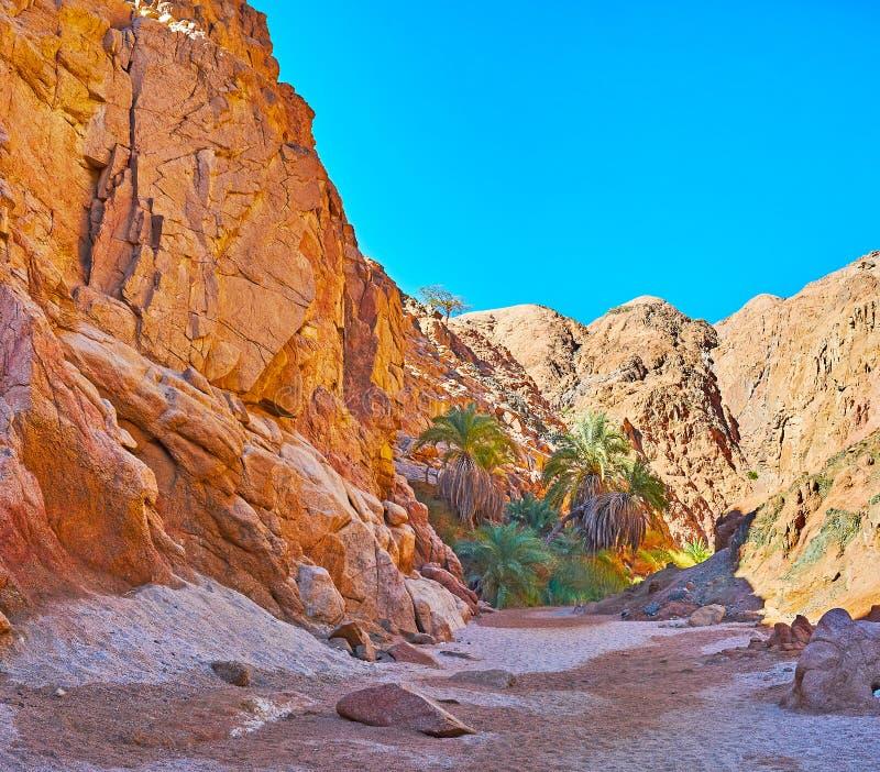 Stenig öken av Sinai, Egypten royaltyfria foton