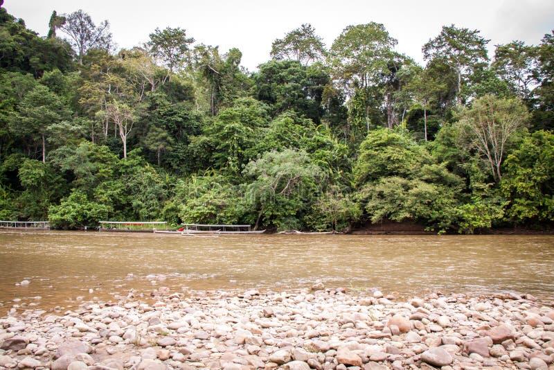 Stenig flodsäng i en frodig grön djungel royaltyfria bilder