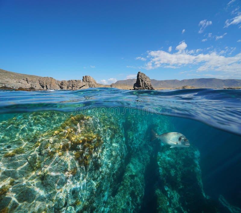 Stenig kust och fisk undervattens- Cabo de Gata Spain arkivfoton