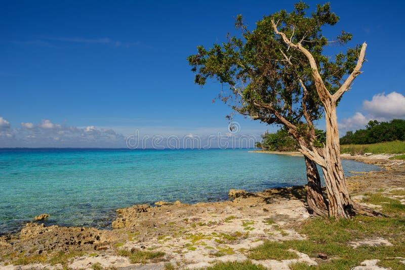 Stenig kust på playaen Larga i Kuba royaltyfri bild