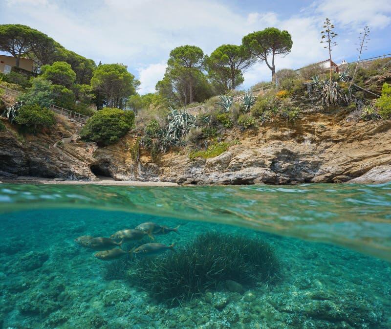 Stenig kustfisk undervattens- medelhavs- Spanien arkivfoto