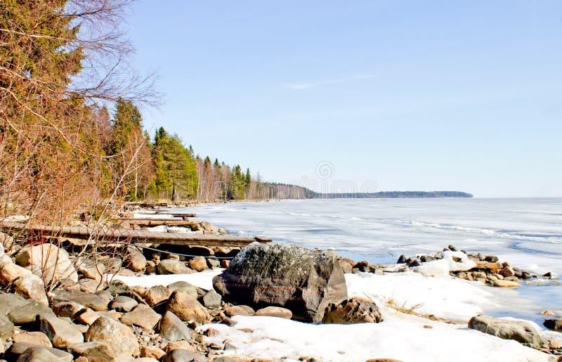 Stenig kustlinje och barrskog royaltyfria foton