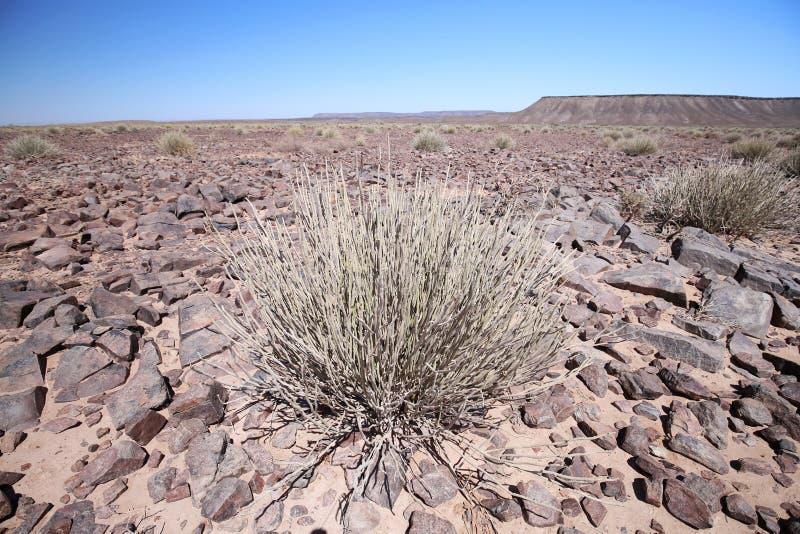 Stenig namibian öken arkivfoton