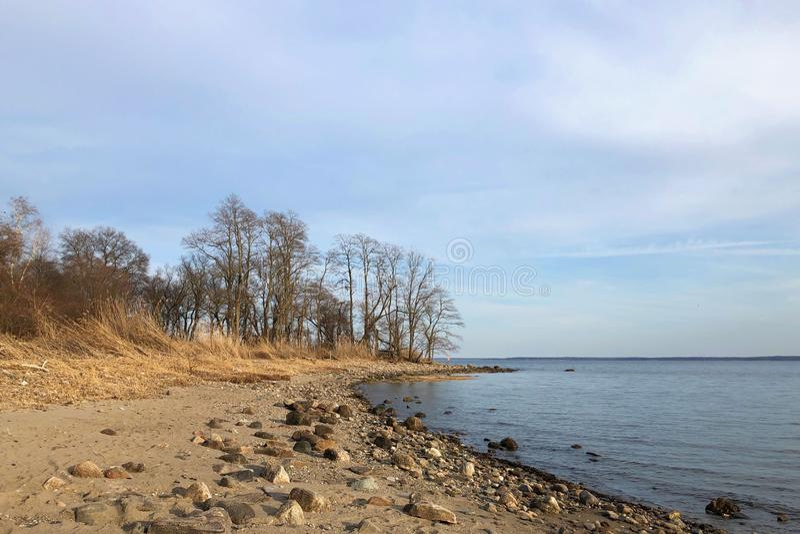 Stenig strand med träd i råg, New York arkivfoto
