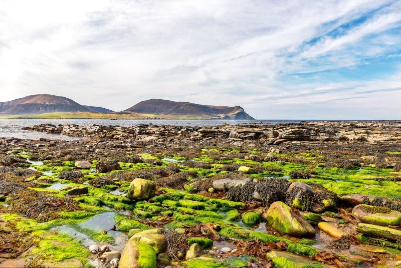 Stenig strand nära Stromness royaltyfri fotografi