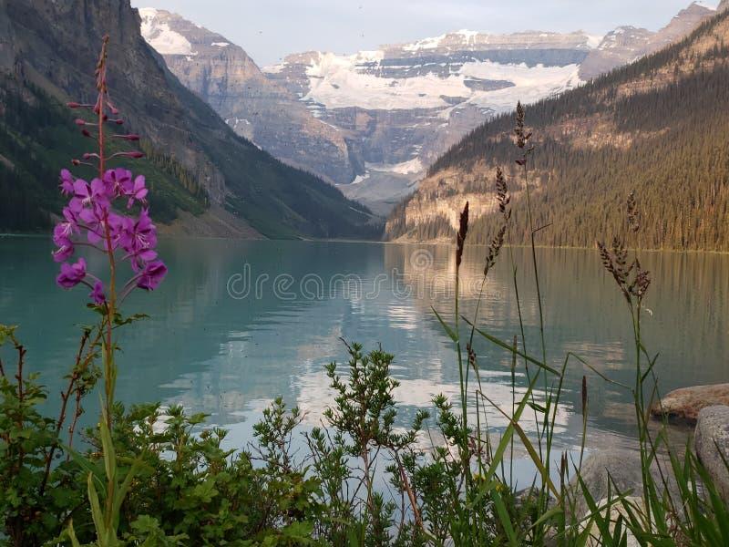 steniga kanadensiska berg royaltyfri foto