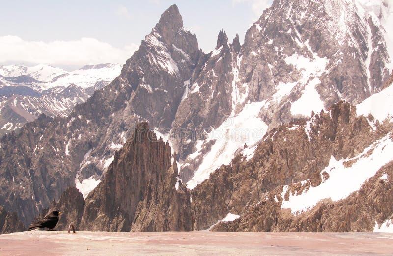 steniga svarta berg för fågel royaltyfria foton