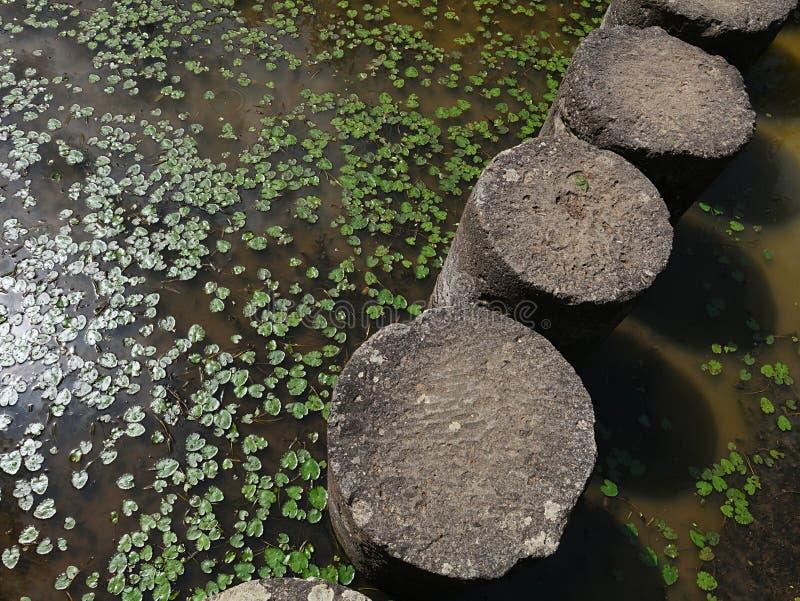 Stenkolonner som bana till och med det halva torkade dekorativa trädgårddammet med några vatten- lövrika växter arkivfoton
