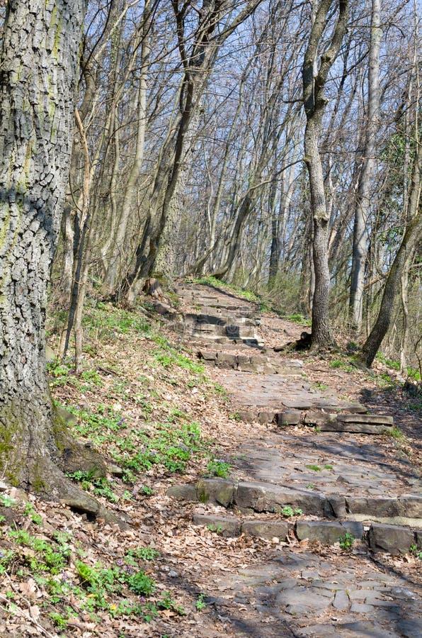 Stenlade Forest Pathway arkivfoton