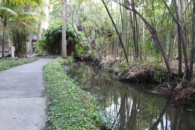 Stenlagd bana längs floden i en botanisk trädgård på det Florida institutet av teknologi, Melbourne Florida arkivbilder