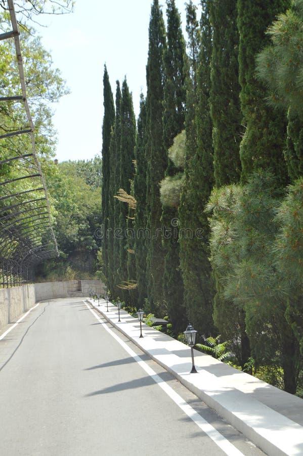 Stenlagd väg med lyktor längs cypressgränden i parkera på en solig sommardag arkivfoton