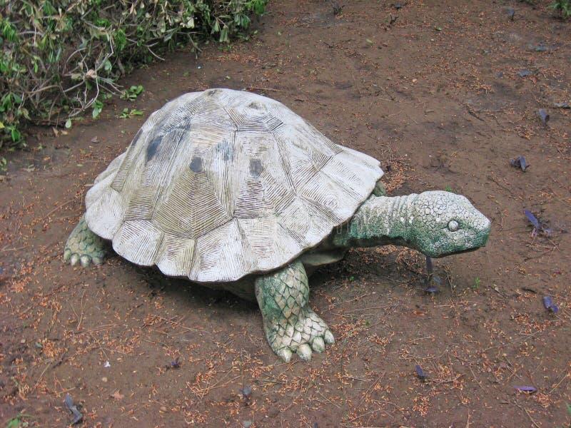 Stensköldpadda i en trädgård arkivfoton