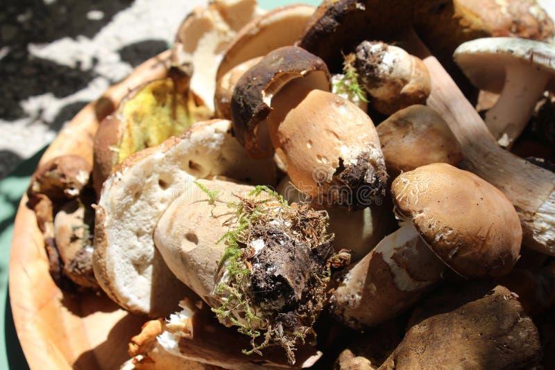 Stensoppchampinjon, porcino, ätligt, smakligt som är rå i en träplatta arkivfoton