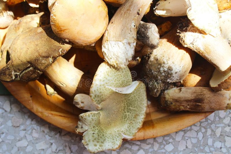 Stensoppchampinjon, porcino och ätliga russulavirescens, smakligt, rått i en träplatta royaltyfri bild
