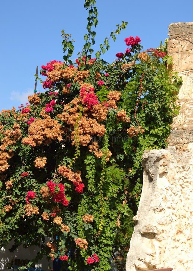 Stenstaket och blommor royaltyfri bild
