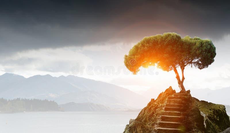 Stenväg som överst går upp, och träd Blandat massmedia royaltyfri fotografi