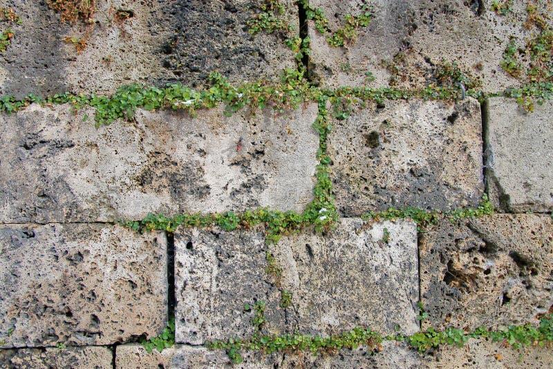 Stenvägg av den forntida staden royaltyfri foto
