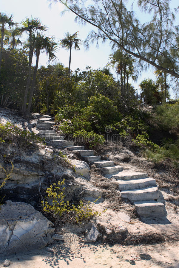 Download Step into the jungle stock image. Image of ancient, steps - 13753667