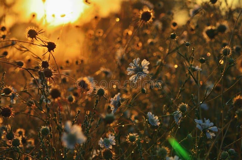 Step kwitnie w ranku słońcu na outside zdjęcia stock
