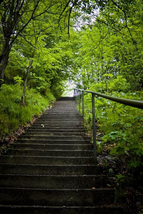 step lasu zdjęcie stock